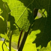 025-gastronomia-vino